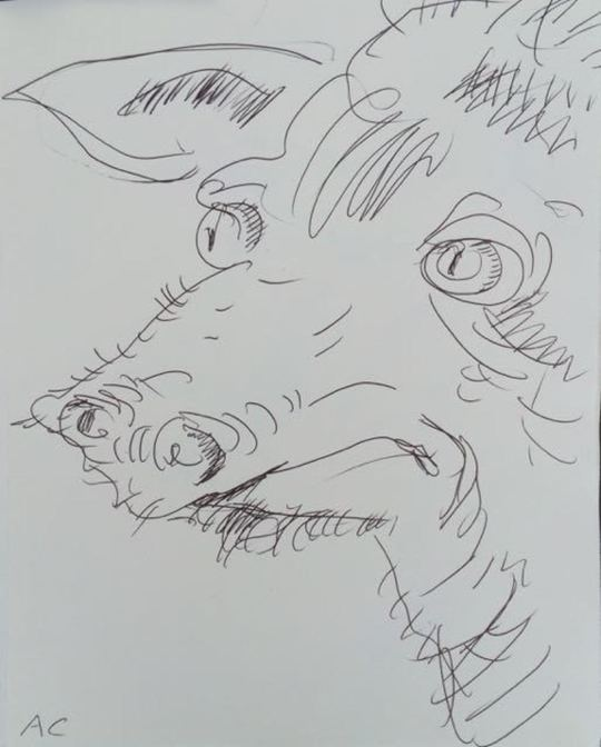piglet boar